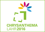 Chrysanthema 2016